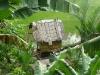 Maison des rizières - Photo 3